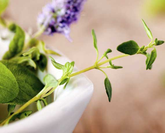 Naturopathy ingredients
