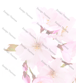 pink-flowers-with-opaque-white-bg