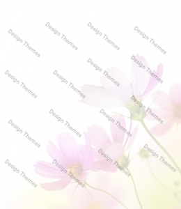 yellow-pink-flowers-with-opaque-white-bg